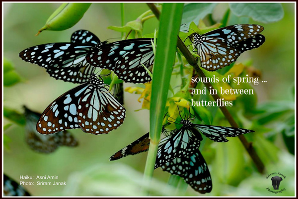 'sounds of spring / and in between / butterflies' by Asni Amin. Art by Sriam Janak