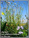 'first date�  /over wildflower' bouquet /  her blue eyes' by Zuzanna Truchlewska