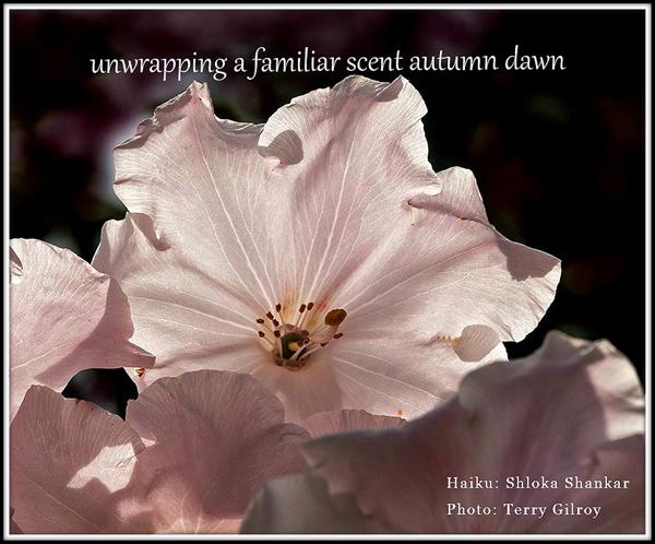 'unwrapping a familiar scent autumn dawn' by Shloka Shankar. Art by Terry Gilroy.