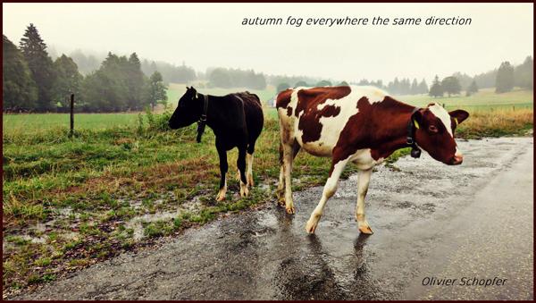 'autumn fog everywhere the same direction' by Olivier Schopfer