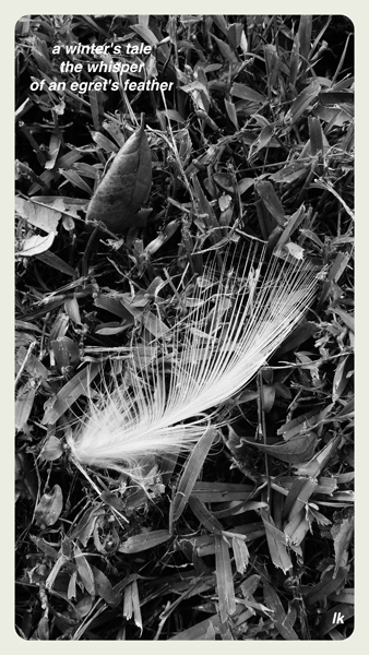 'a winter's tale / the whisper / of an egret's feather' by Laurie Kuntz