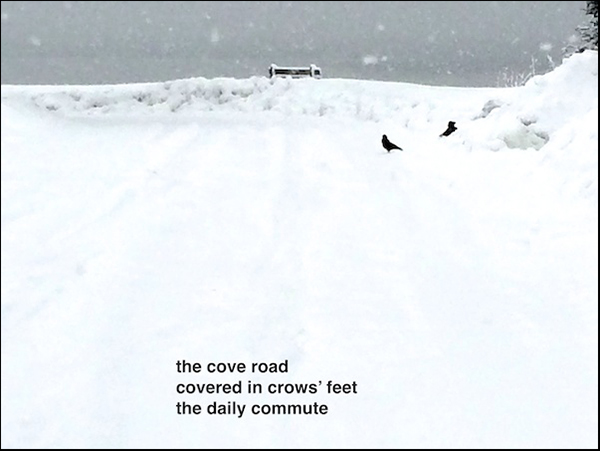 'the cove road / covered in crow's feet / the daily commute' by Doug Norris