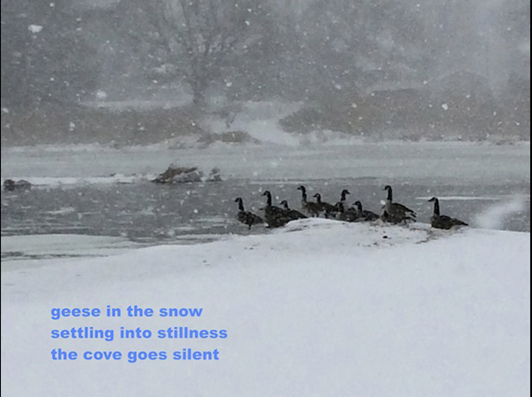 'geese in the snow / settling into stillness / the cove goes silent' by Doug Norris