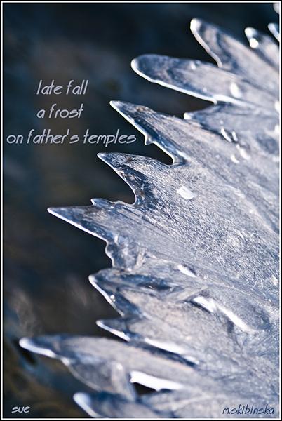 'late fall / a frost / on father's temples' by Zuzanna Truchlewska. Art by Malgozata Skibinska