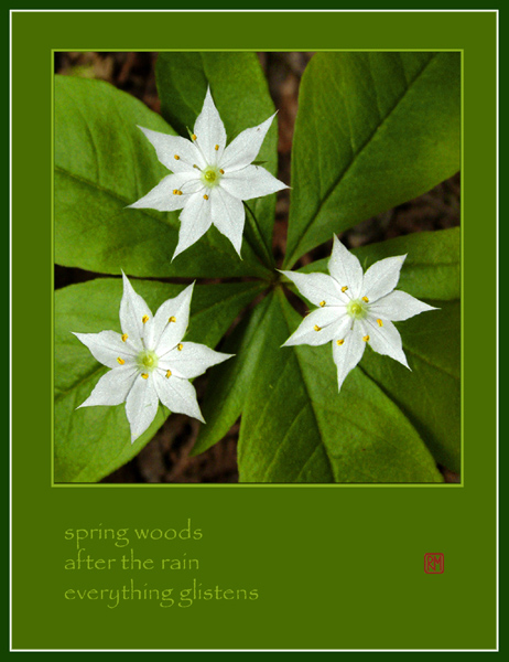 'spring woods / after the rain/ everything glistens' by Ruth Mittelholtz