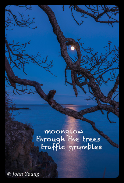 'moonglow / through the trees / traffic grumbles' by John Young