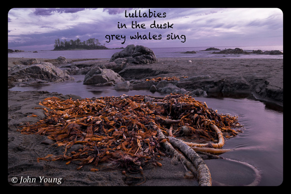 'lullabies / in the dusk / grey whales sing' by John Young