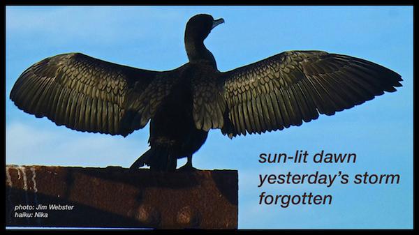 'sun-lit dawn / yesterday's storm / forgotten' by jim Forve aka Nika. Art by Jim Webster