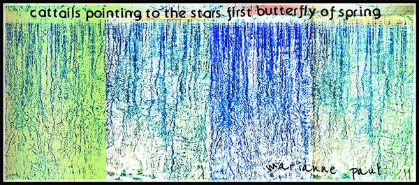 'cattails pointing to the stars first butterfly of spring' by Marianne Paul