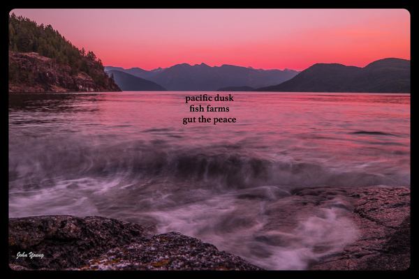 """pacific dusk / fish farms / gut the peace' by John Young"