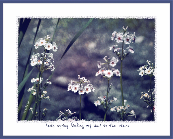 'late spring finding my way to the stars' by Barbara Kaufmann