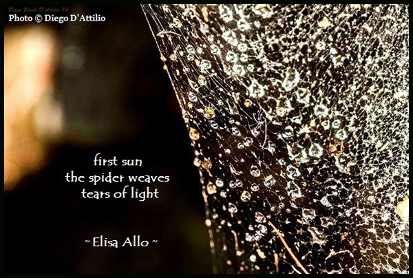 """""""first sun / the spider weaves / tears of light' by Elisa Allo. Art by Diego D'Attilio."""