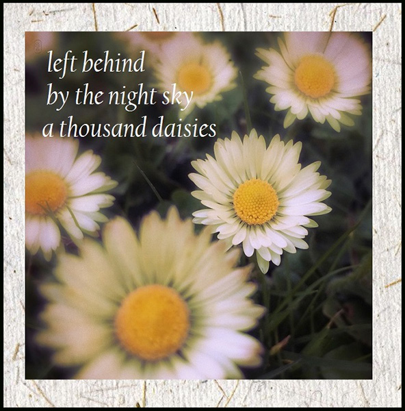 'left behind / by the night sky / a thousand daisies' by Andy Mclellan. Art by Cristina Omichi-Smith