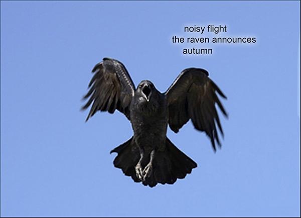 'noisy fight / the raven announces / autumn' by Pere Risteski