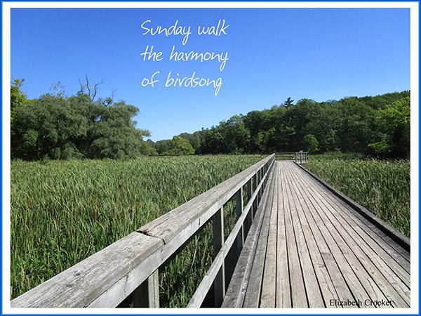 'Sunday walk / the harmony / of birdsong' by Elizabeth Crocket