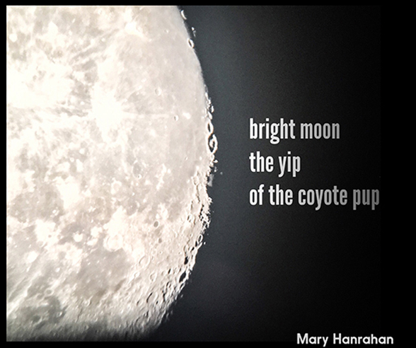 'bright moon / the yip / of the coypte pup' by Mary Hanrahan