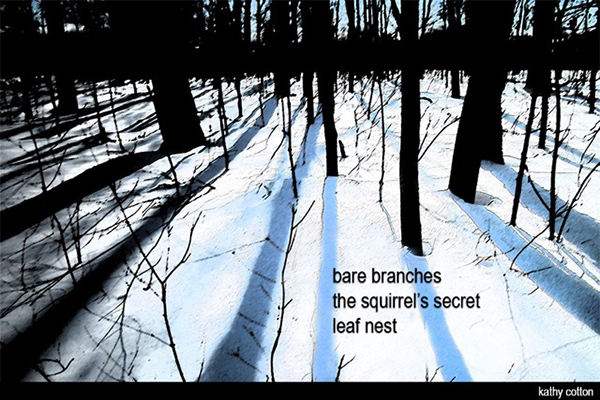 'bare branches / the squirrel's secret / leaf nest' by Kathy Cotton