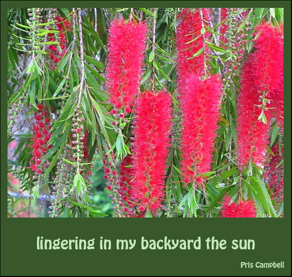 """""""lingering in my backyard the sun"""" by Pris Campbell"""