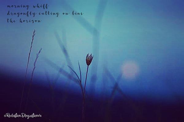 'morning whiff / dragonfly cutting on bias / the horizon' by Radostina Dragostinova