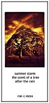 'summer storm / the scent of a tree / after the rain' by Ron Moss
