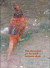 'the pheasant— / on its back / autumn dusk' by Hifsa Ashraf