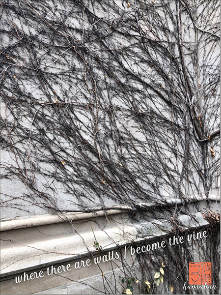 'where there are walls / become the vine' by Mary Hanrahan