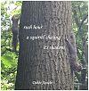 'rush hour / a squirrel chasing / its shadow' by Debbi Antebi