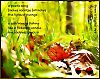 'a poetic song / finches vocalize fall notes / the lyrics of change / a soft breeze flirting / like a flickering candle / the coolness seeps inm' by Linda Wolff
