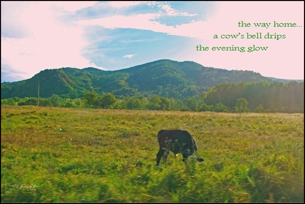 'the way home... / a cow's bell drips / the evening glow' by Steliana Voicu