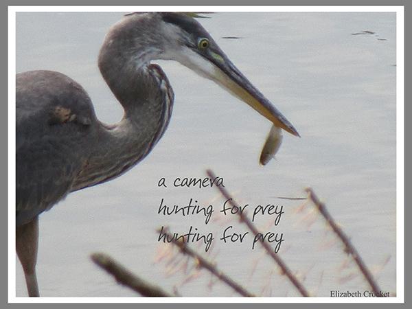 'a camera / hunting for prey / hunting for prey' by Elizabeth Crocket