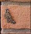 'old brick / just for a moment / the butterfly' by Nazarena Rampini