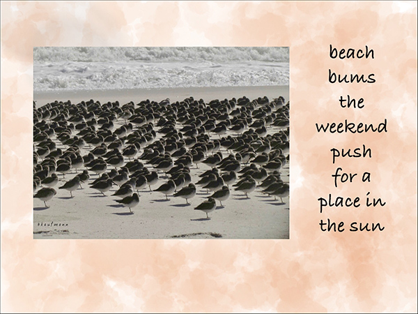 'beach bums the weekend push for a place in the sun' by Barbara Kaufmann