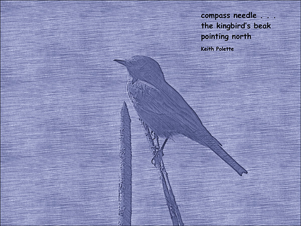 'compass needle... / the kingbird's beak / pointing north' by Keith Polette