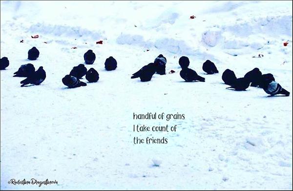 'handful of grains / I take count of / the friends' by Radostina Dragostinova
