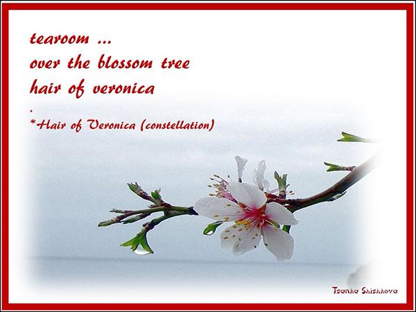 'tearoom... / over the blossom tree / hair of veronica' by Tsanka Shishkova