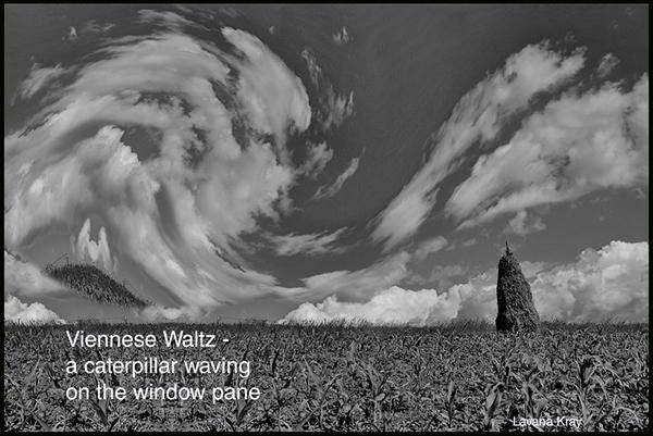 'Viennese waltz— / a caterpillar waving / on the window pane' by Lavana Kray