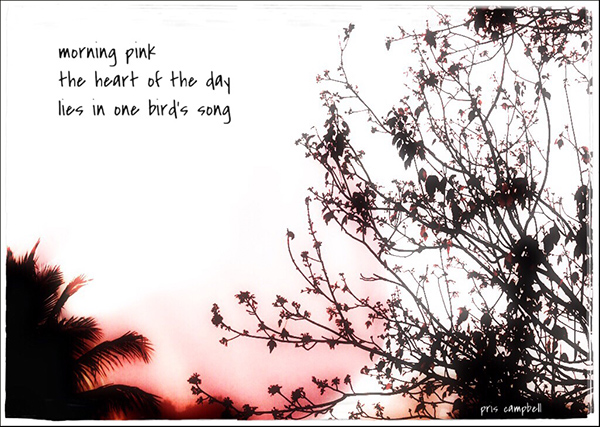 'morning pink / the heart of the day / lies in one bird's song' by Pris Campbell