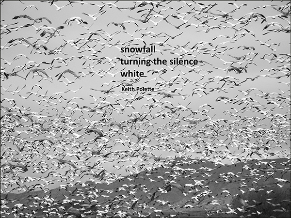 'snowfall / turning the silence / white' by Keith Polette