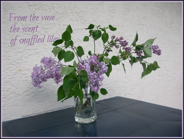 'from the vase / the scent / of snaffled lilac' by Hartmut Fillhardt