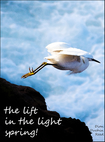 'the lift / in the light / spring!' by Dian reed