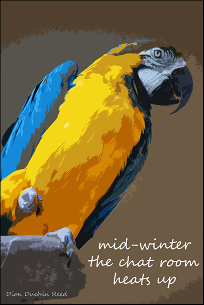 'mid-winter / the chat room / heats up' by Dian Reed