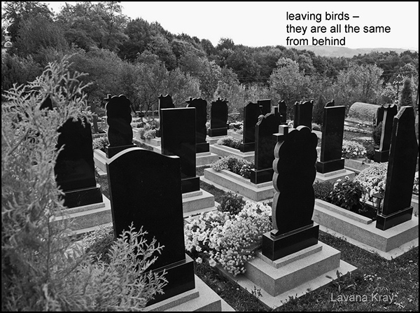 'leaving birds— / they are all the same / from behind' by Lavana Kray