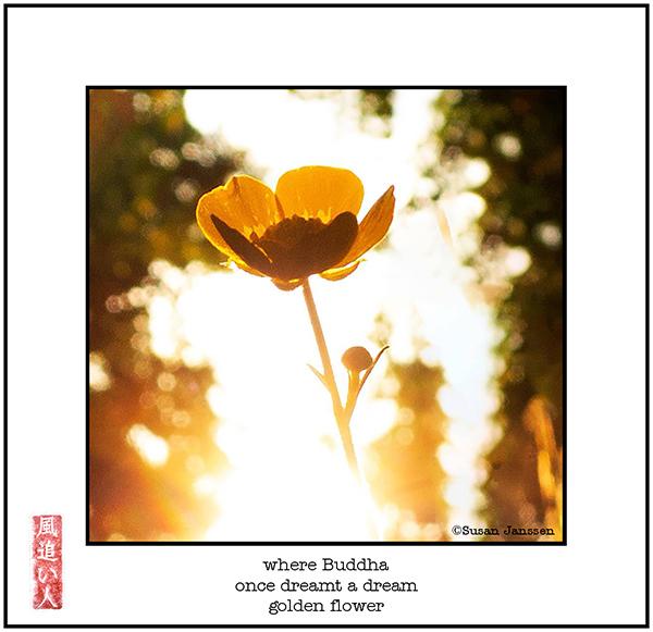 'where buddha / once dreamed a dream / golden flower' by Damir Damir