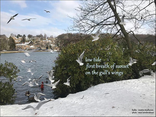'low tide / first breath of sunset/ on the gull's wings' by Mamta Madhavan. Art by Mini Unnikrishnan. Haiku first published in http://hedgerow.com.