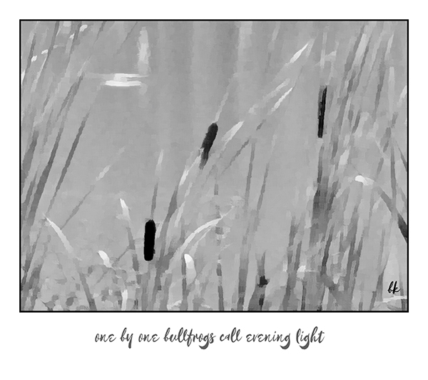 'one by one bullfrogs call evening light' by Barbara Kaufmann