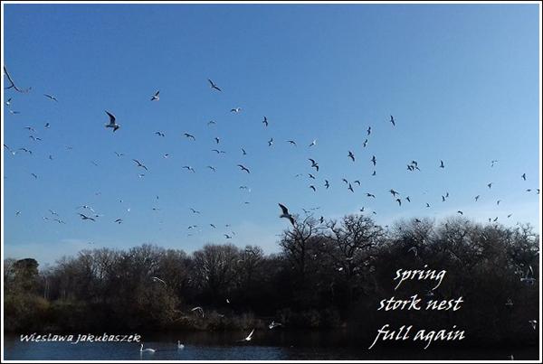 'spring / stork nest / full again' by Wieslawa Jakubaszek