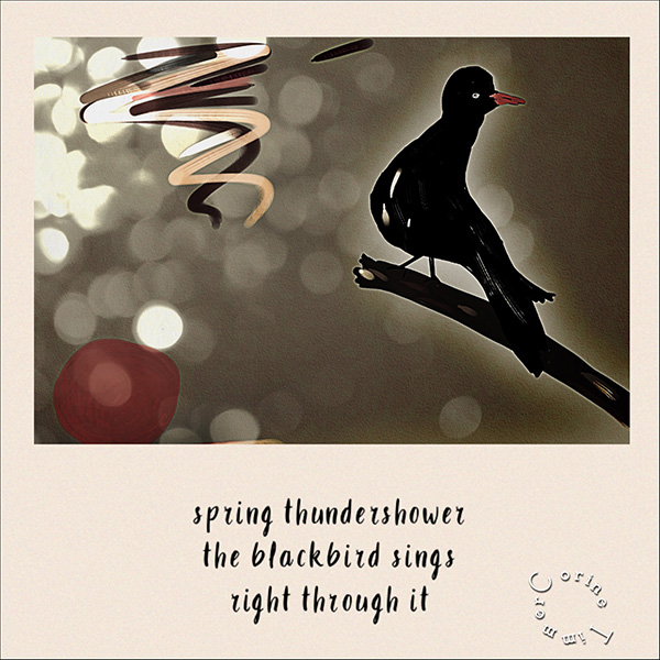 'spring thunderstorms / the blackbird sings / right through it' by Corine Timmer