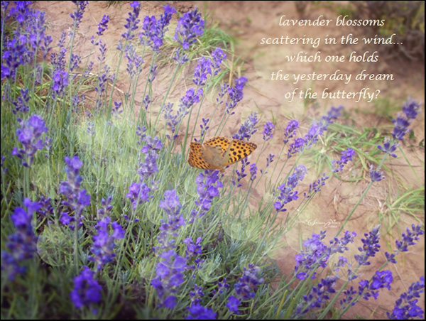 'lavender blossoms / scattering on the wind...  / which one holds / the yesterday dream  / of a butterfly?' by Steliana Voicu