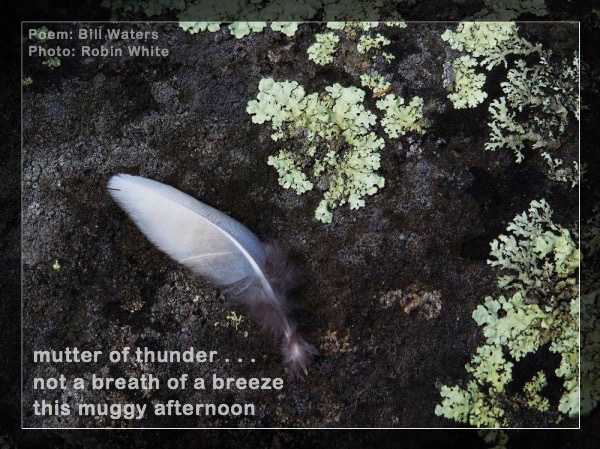 'mutter of thunder... / not a breath of a breeze / this muggy afternoon' by Bill Waters. Art by Robin White