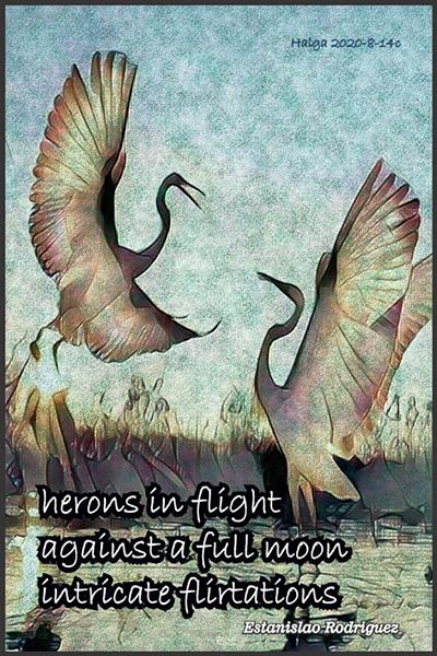 'herons in flight / against a full moon / intricate flirtations' by Estanislao Rodriguez-Cuevas
